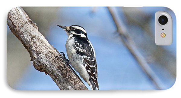 IPhone Case featuring the photograph Female Downey Woodpecker 1104  by Michael Peychich