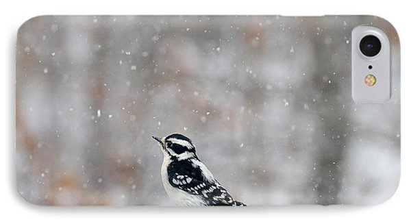 Female Downy Woodpecker IPhone Case
