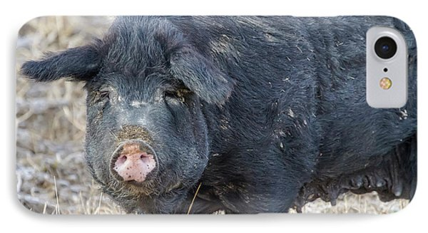 IPhone 7 Case featuring the photograph Female Hog by James BO Insogna