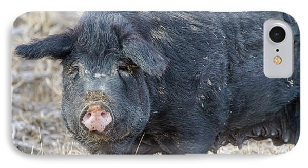 IPhone Case featuring the photograph Female Hog by James BO Insogna