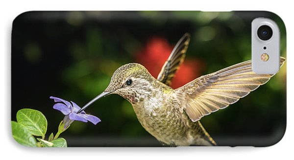 IPhone Case featuring the photograph Female Hummingbird And A Small Blue Flower Left Angled View by William Lee