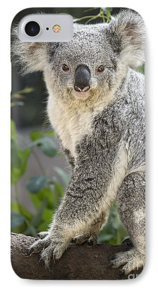 Female Koala IPhone 7 Case by Jamie Pham
