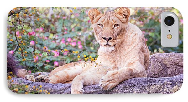 Female Lion Resting IPhone Case by Stephanie Hayes