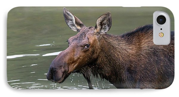 IPhone Case featuring the photograph Female Moose Head by James BO Insogna