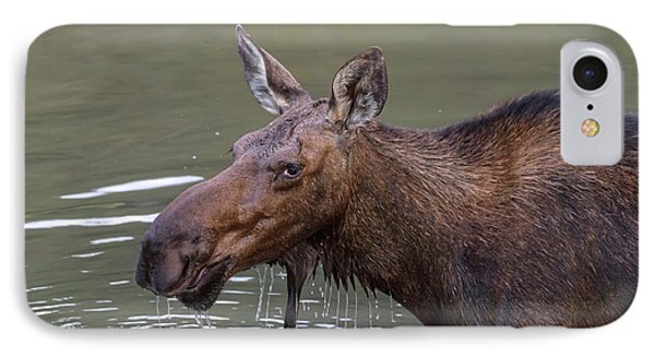 IPhone Case featuring the photograph Female Moose Head Shot by James BO Insogna