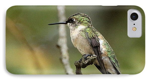 Female Ruby-throated Hummingbird On Branch IPhone Case by Sheila Brown