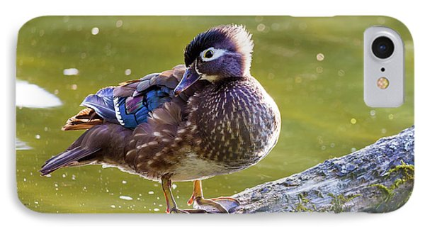 Female Wood Duck Phone Case by David Gn