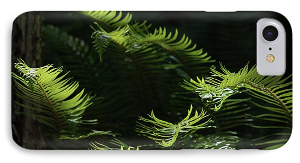 Ferns In The Forest IPhone Case by Keith Boone