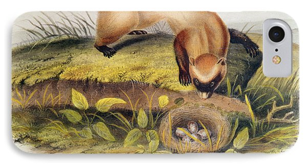 Ferret IPhone Case by John James Audubon