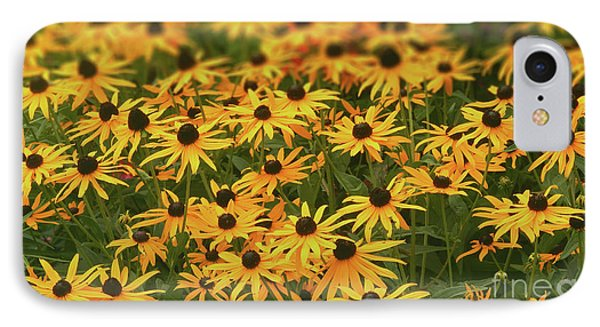 Field Of Black-eyed Susans IPhone Case