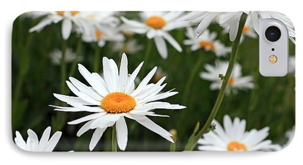 Field Of Daisies IPhone Case by Dorothy Cunningham