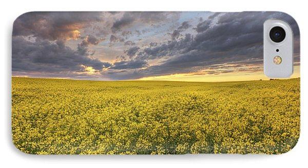 IPhone Case featuring the photograph Field Of Gold by Dan Jurak