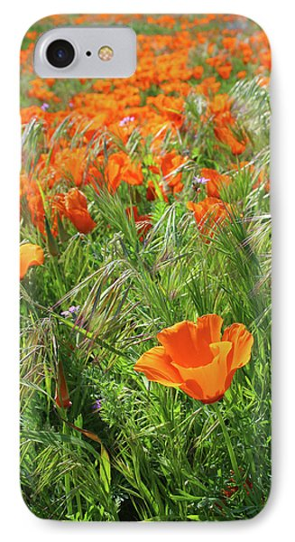 Field Of Orange Poppies- Art By Linda Woods IPhone Case by Linda Woods