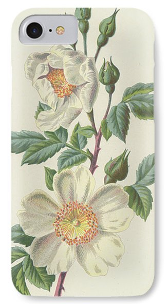 Field Rose IPhone Case by Frederick Edward Hulme