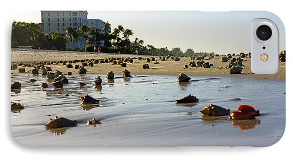 Fighting Conchs At Lowdermilk Park Beach In Naples, Fl  IPhone Case