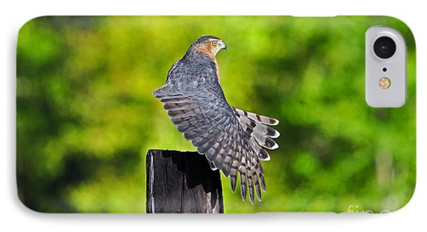 IPhone Case featuring the photograph Fine Feathers by Al Powell Photography USA