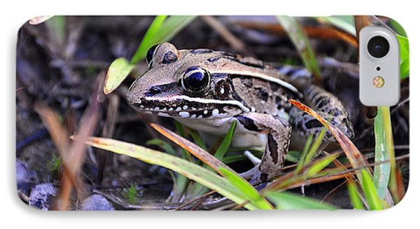 IPhone Case featuring the photograph Fine Frog by Al Powell Photography USA
