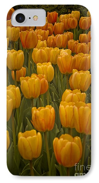 IPhone Case featuring the photograph Fine Lines In Yellow Tulips by Michael Flood