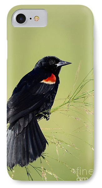 Fine Perch IPhone Case by Kathy Gibbons