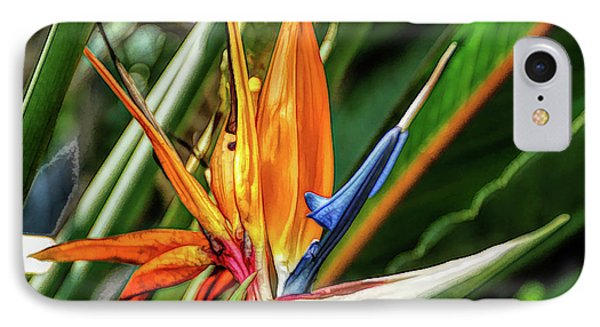 IPhone Case featuring the photograph Fine Wine Cafe Bird Of Paradise by Aimee L Maher Photography and Art Visit ALMGallerydotcom