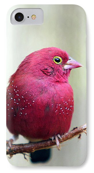 Fire Finch IPhone Case by Marion Cullen