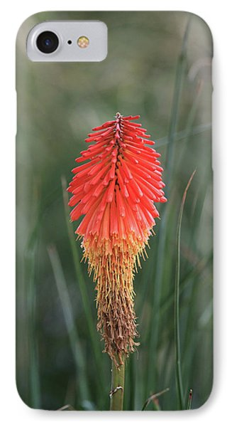 IPhone 7 Case featuring the photograph Firecracker by David Chandler