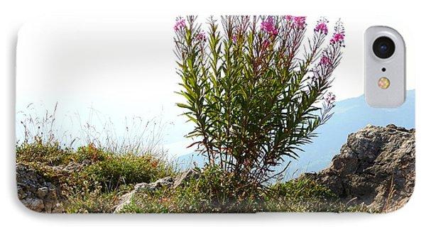 Fireweed Epilobium Angustifolium IPhone Case