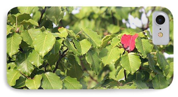 First Fall Leaf IPhone Case