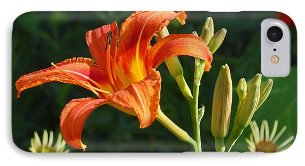 First Flower On This Lily Plant IPhone Case by Steve Augustin