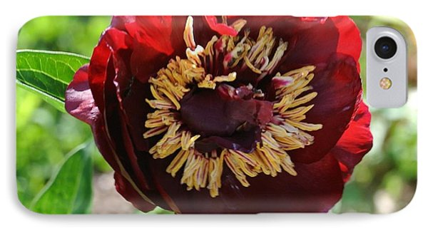 First Peony Bloom IPhone Case by Marsha Heiken