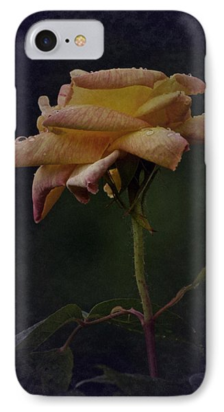 First Vintage Rose 2017 IPhone Case by Richard Cummings
