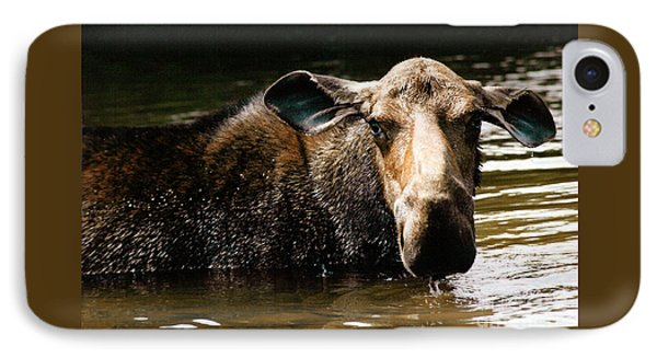 First West Branch Pond Moose IPhone Case