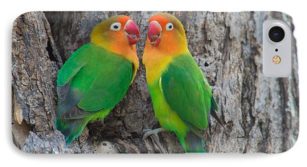 Lovebird iPhone 7 Case - Fischers Lovebird Agapornis Fischeri by Panoramic Images