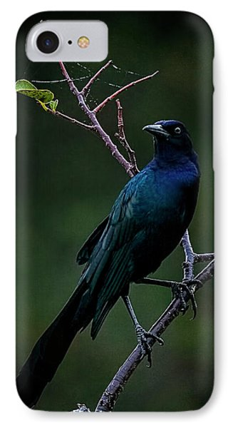 Male Boat-tailed Grackle IPhone Case by Cyndy Doty
