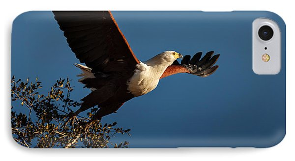 Fish Eagle Taking Flight IPhone Case by Johan Swanepoel