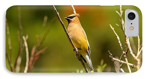 Fishercap Cedar Waxwing IPhone 7 Case by Adam Jewell