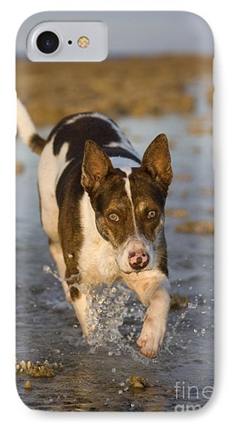 Fishing Dog Of Polynesia IPhone Case by Jean-Louis Klein & Marie-Luce Hubert