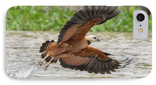 Fishing Hawk IPhone Case by Wade Aiken