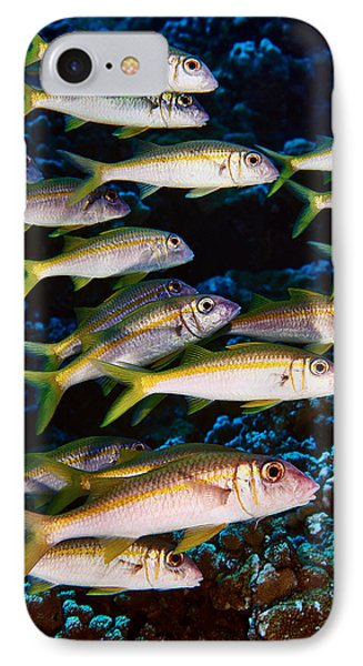 Fla-150811-nd800e-26035-color IPhone Case by Fernando Lopez Arbarello