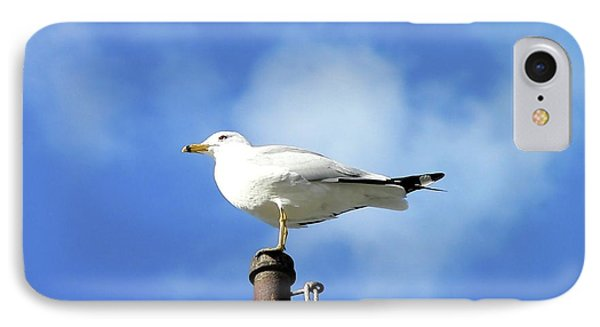 Flagpole Gull Phone Case by Al Powell Photography USA