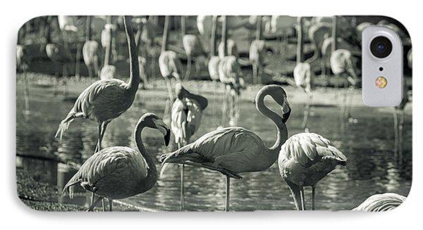 Flamboyance Of Flamingos IPhone Case by Jason Moynihan