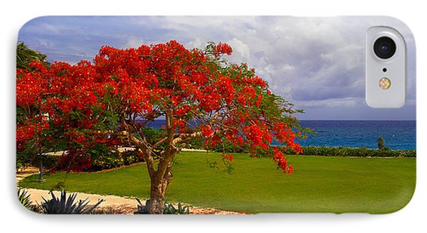 Flamboyant Tree In Grand Cayman IPhone Case by Marie Hicks