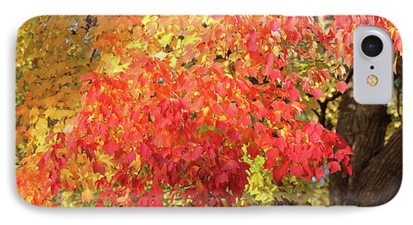 Flaming Autumn 3 Leaves Art IPhone Case by Reid Callaway