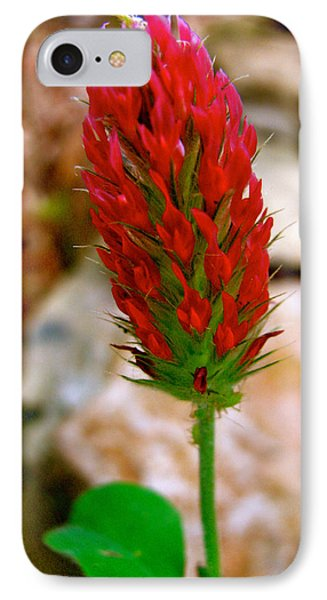 IPhone Case featuring the photograph Flaming Red by Debra     Vatalaro