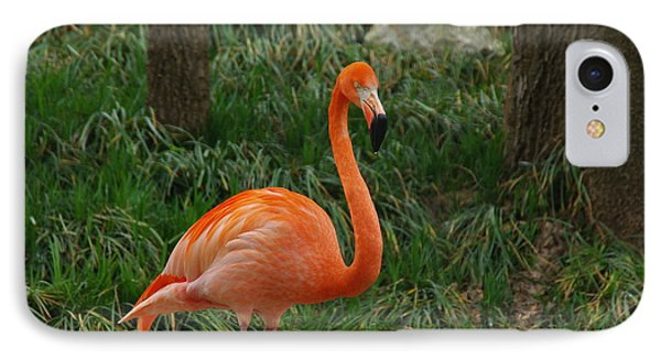 Flamingo 1 IPhone Case by Robyn Stacey