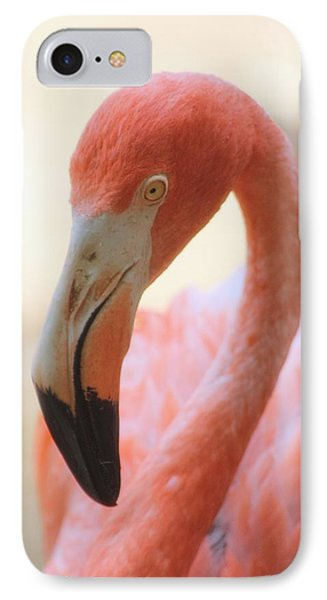 IPhone Case featuring the photograph Flamingo 2 by Elizabeth Budd