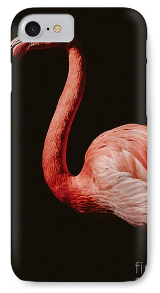 IPhone Case featuring the photograph Flamingo 7 by Andrea Anderegg