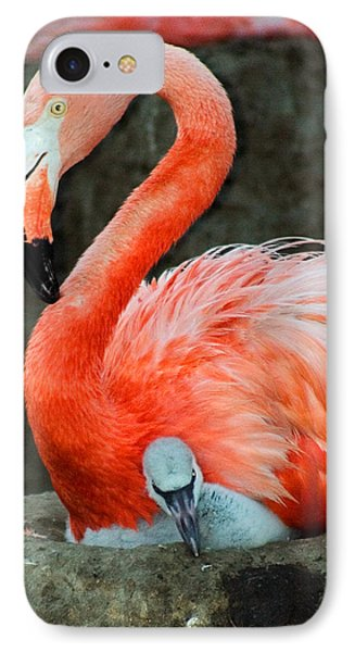 Flamingo And Baby IPhone Case by Anthony Jones