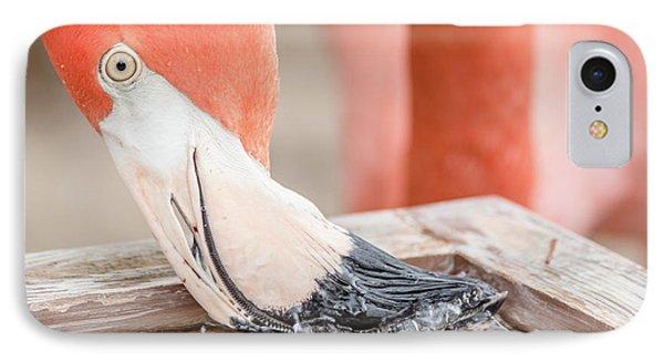 Flamingo At Sea World In Orlando Florida IPhone Case by Peter Ciro