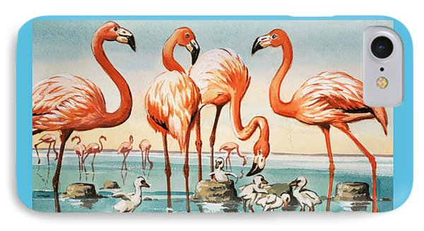 Flamingoes IPhone Case by English School